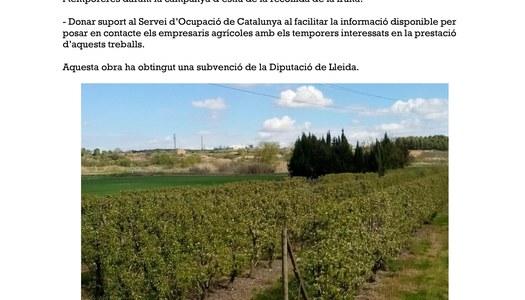 Oficina municipal de la campanya agrària 2018 a l'Ajuntament de Vilanova de la Barca